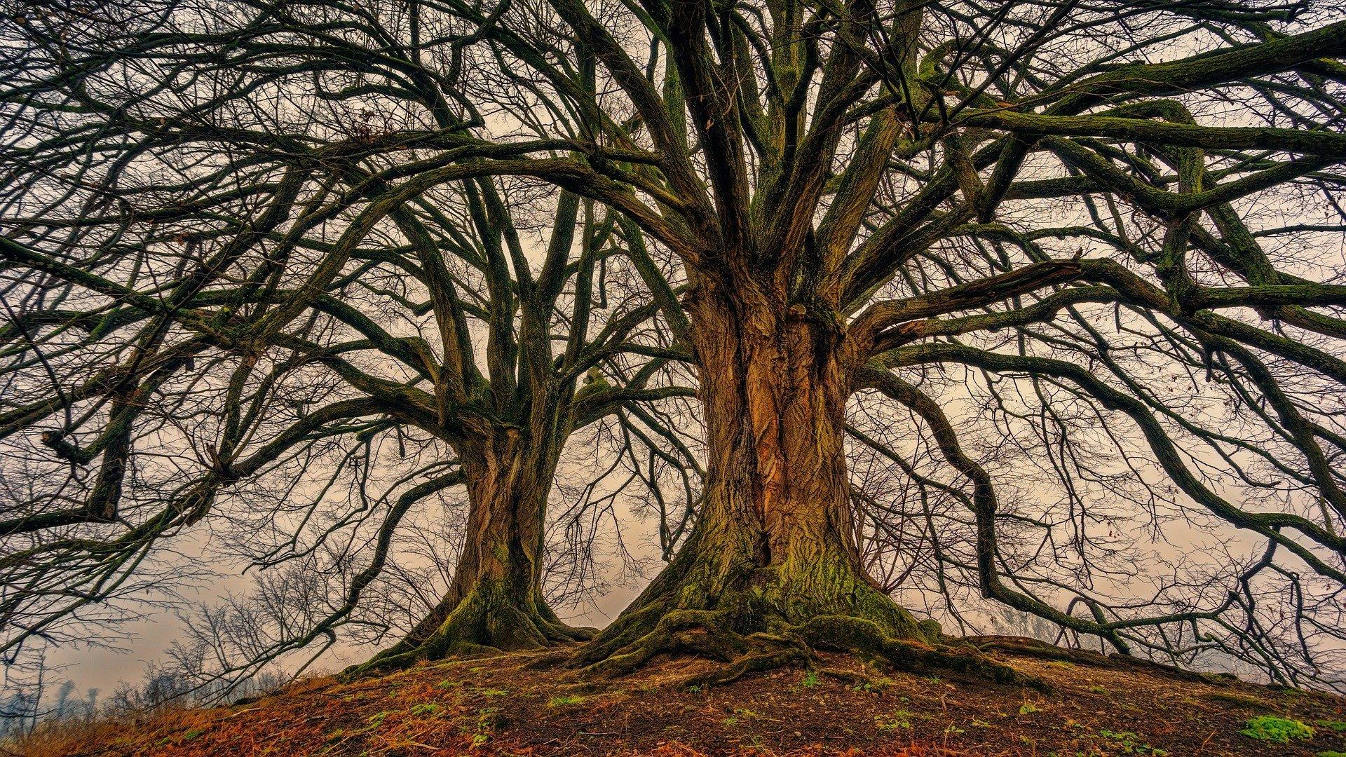 Big tree. | Source: Pixabay