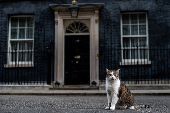 A cat pictured standing on Downing street, London, England | Photo: Getty Images