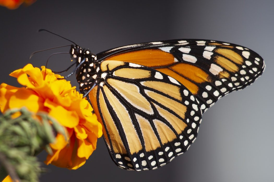 Donna kept asking what a butterfly was | Source: Unsplash