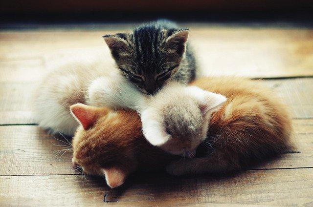 Trois chatons dormant ensemble. l Source: Flickr