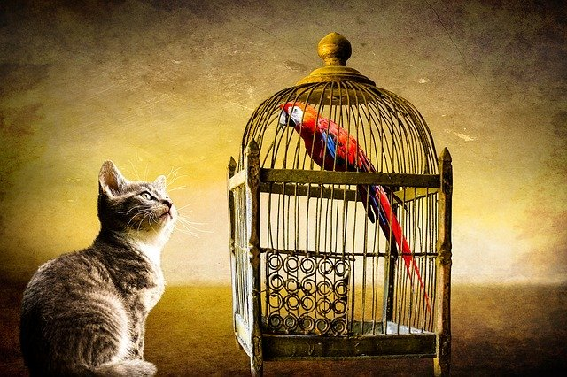 Cat and parrot look at each other | Photo: Pixabay
