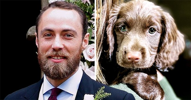 James Middleton Introduces New Furry Addition to His Family in Cute Photos