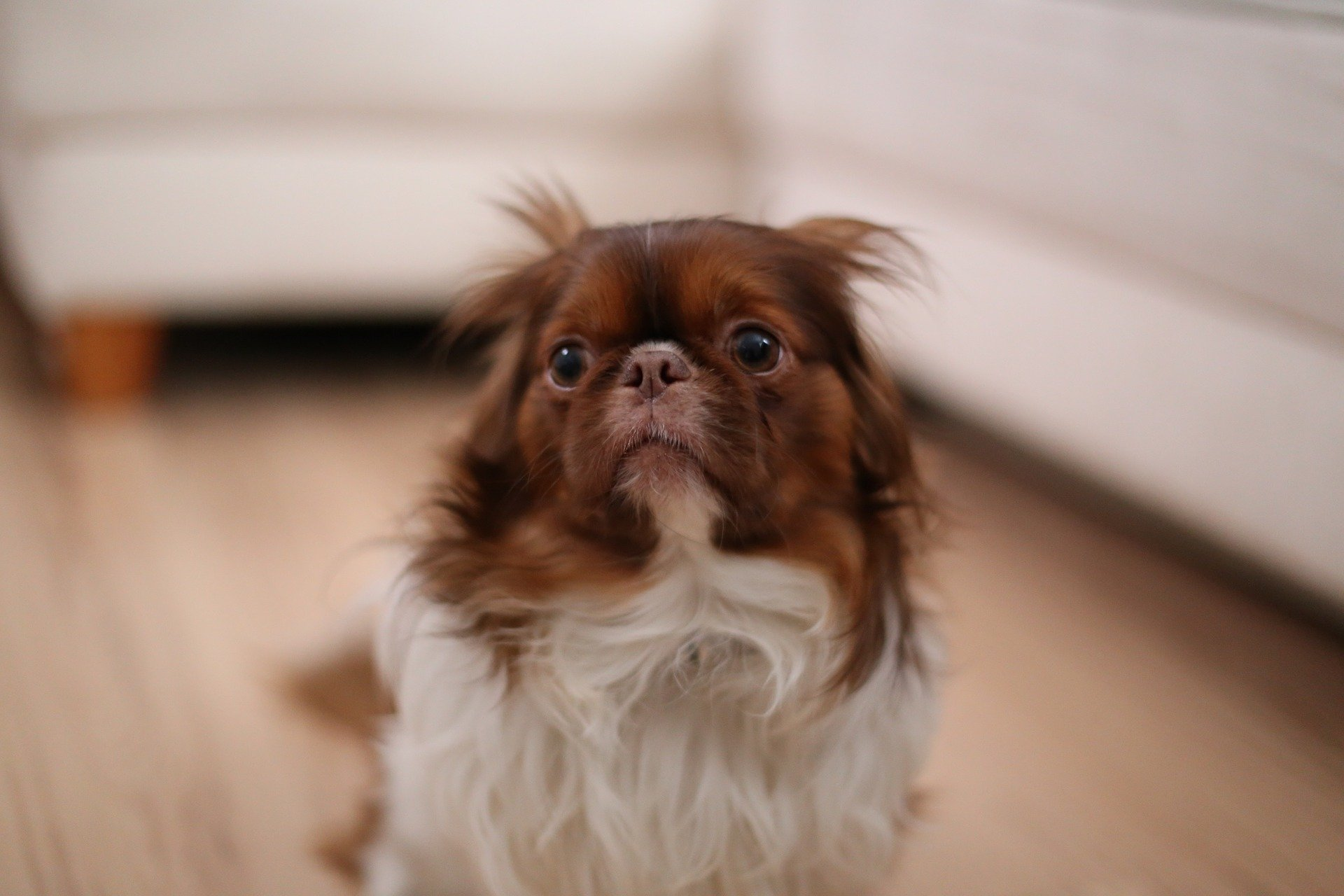 An old and scared-looking dog.   Source: Pixabay.