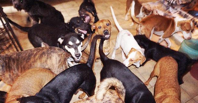 Une femme a abrité 97 chiens errants dans sa maison pour les sauver de l'ouragan Dorian