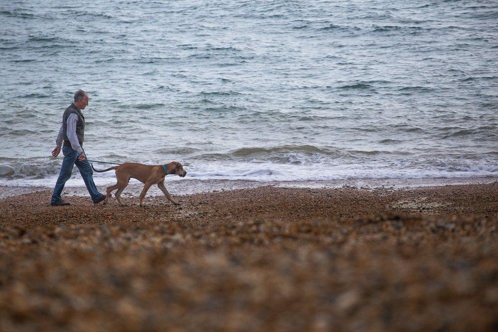 Hombre caminando con perro en la playa. | Imagen: Pexels