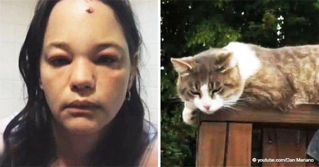 Ce chat s'est vengé brutalement d'une femme qui lui donnait des coups de pied de neige au visage