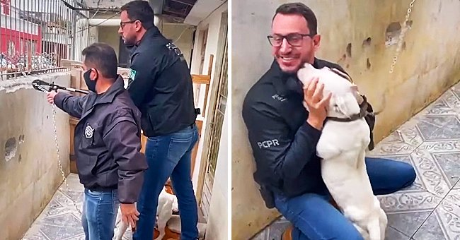 Chained Dog Will Not Stop Kissing the Man Who Set Her Free