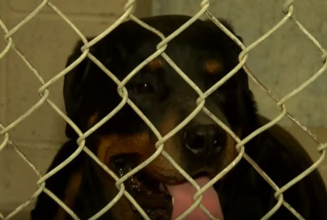 Dog involved in attack/ Source: YouTube/ CBS47 KSEE24