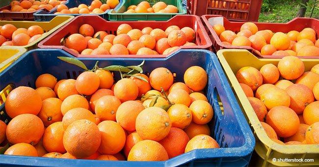 Solo por hoy, 14 de febrero, agricultores distribuyen 4.000 kilos de naranjas gratis en Valencia