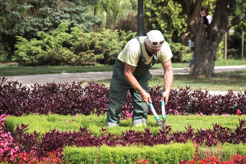 Jardinero podando plantas. | Imagen: Pixabay