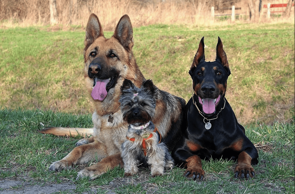 A photo of three dogs. | Photo: Pexels