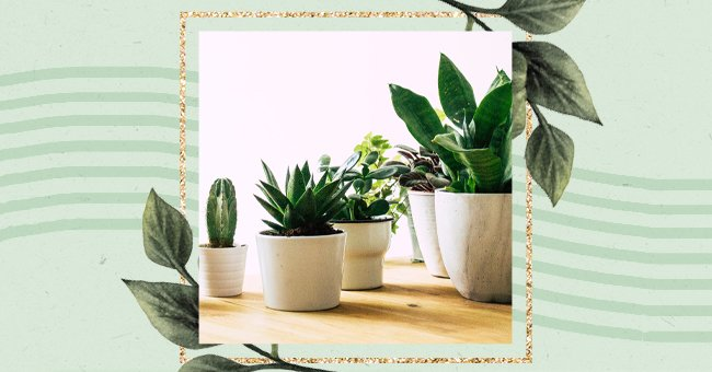 A Guide To Knowing When To Repot Your Plants