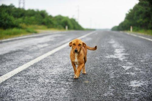 Un chien errant debout sur une route | Photo : Shutterstock