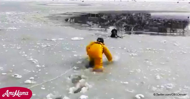 Brave firefighter plunges into an icy pond to rescue a dog that had fallen in