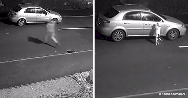 Abandoned dog tries to jump back into car after being dumped on the road by his owner (Video)