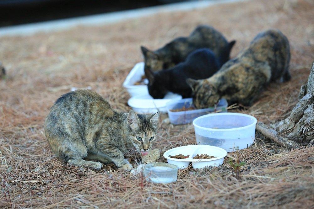 Gatos alimentándose al aire libre. | Imagen: Flickr