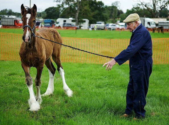 A man holds onto a shire horse foal during 153rd Ryedale Country Show | Photo: Getty Images