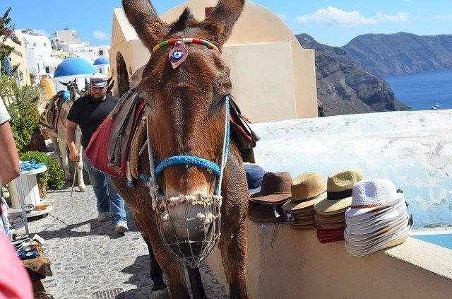Foto de un burro tomada en Santorini, Grecia.   Foto: Pixabay