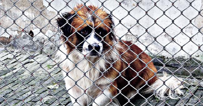 """""""Je ne pouvais pas me le permettre"""" : Un propriétaire a laissé une note avec un chien expliquant pourquoi elle a été abandonnée"""