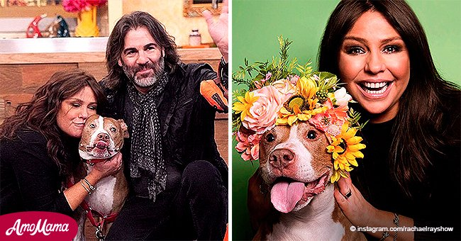 Chef Rachael Ray Mourns Death of Her Beloved Dog Isaboo and Encourages Fans to Adopt Animals
