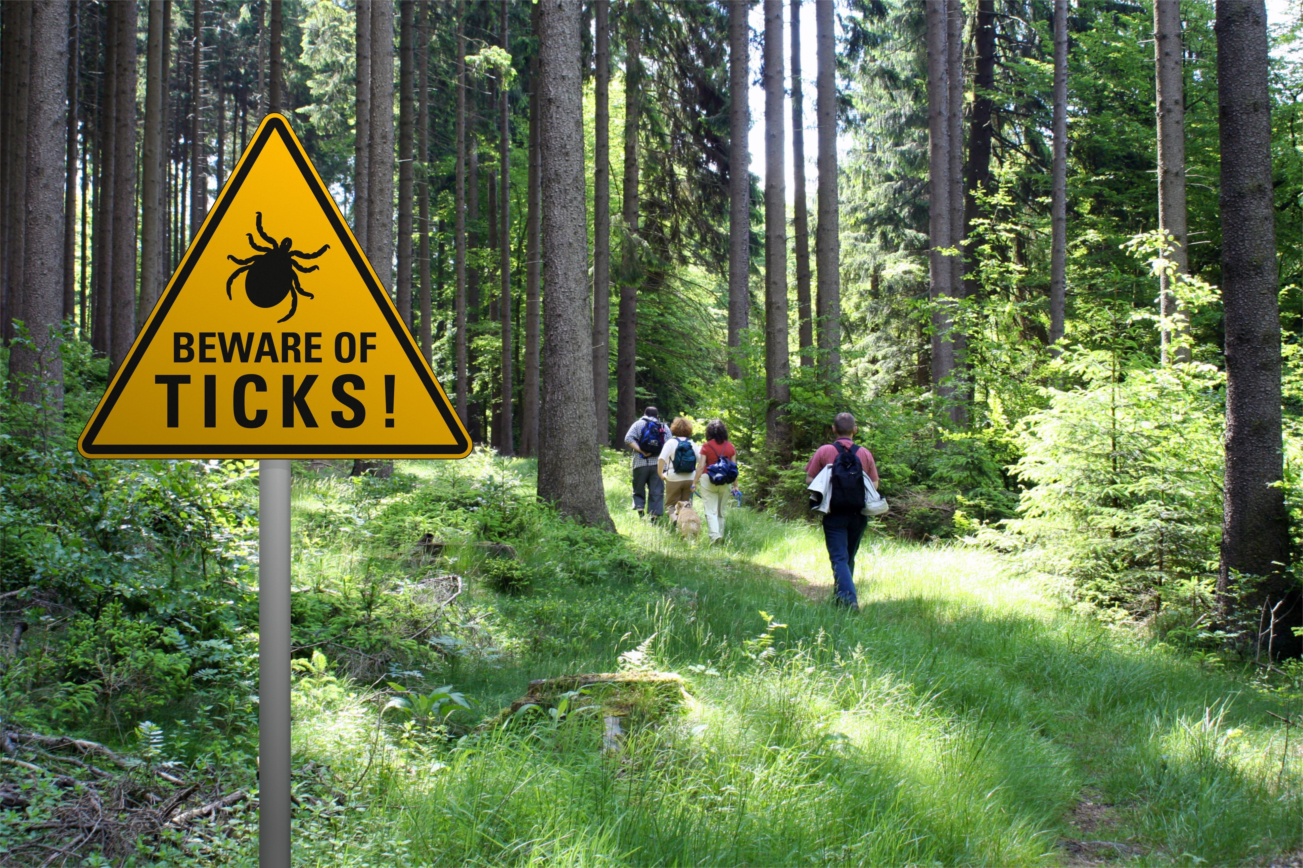 "Warning sign ""beware of ticks"" in infested area in the green forest 