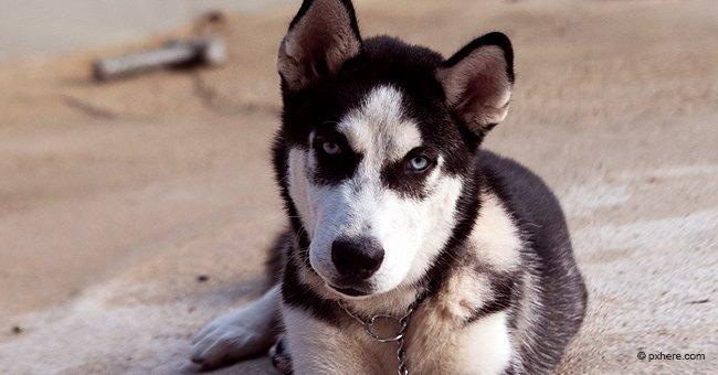 Mujer inicia una petición para salvar de la eutanasia a dos perros que atacaron a niño de 4 años