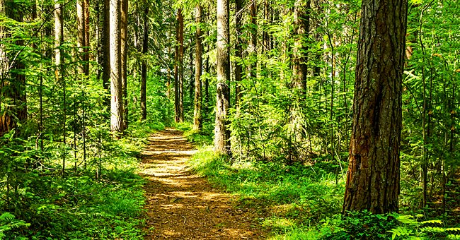 A picture of a forest.  | Photo: Shutterstock