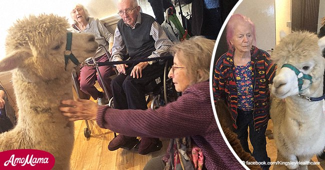 Elderly patient with dementia said furry visitors at the nursing home 'have made my evening'