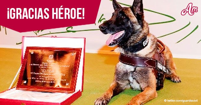 Perro de la Guardia Civil que participó en casos de Marta del Castillo y Gabriel Cruz se jubila