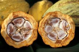 Cacao crudo-Imagen tomada de Pxhere