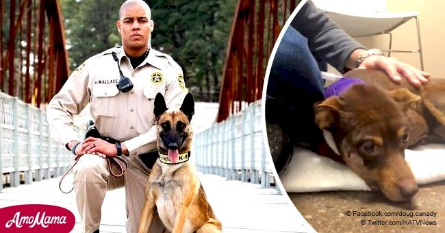 Sheriff's deputy fired after he was seen on video shooting chihuahua in the face