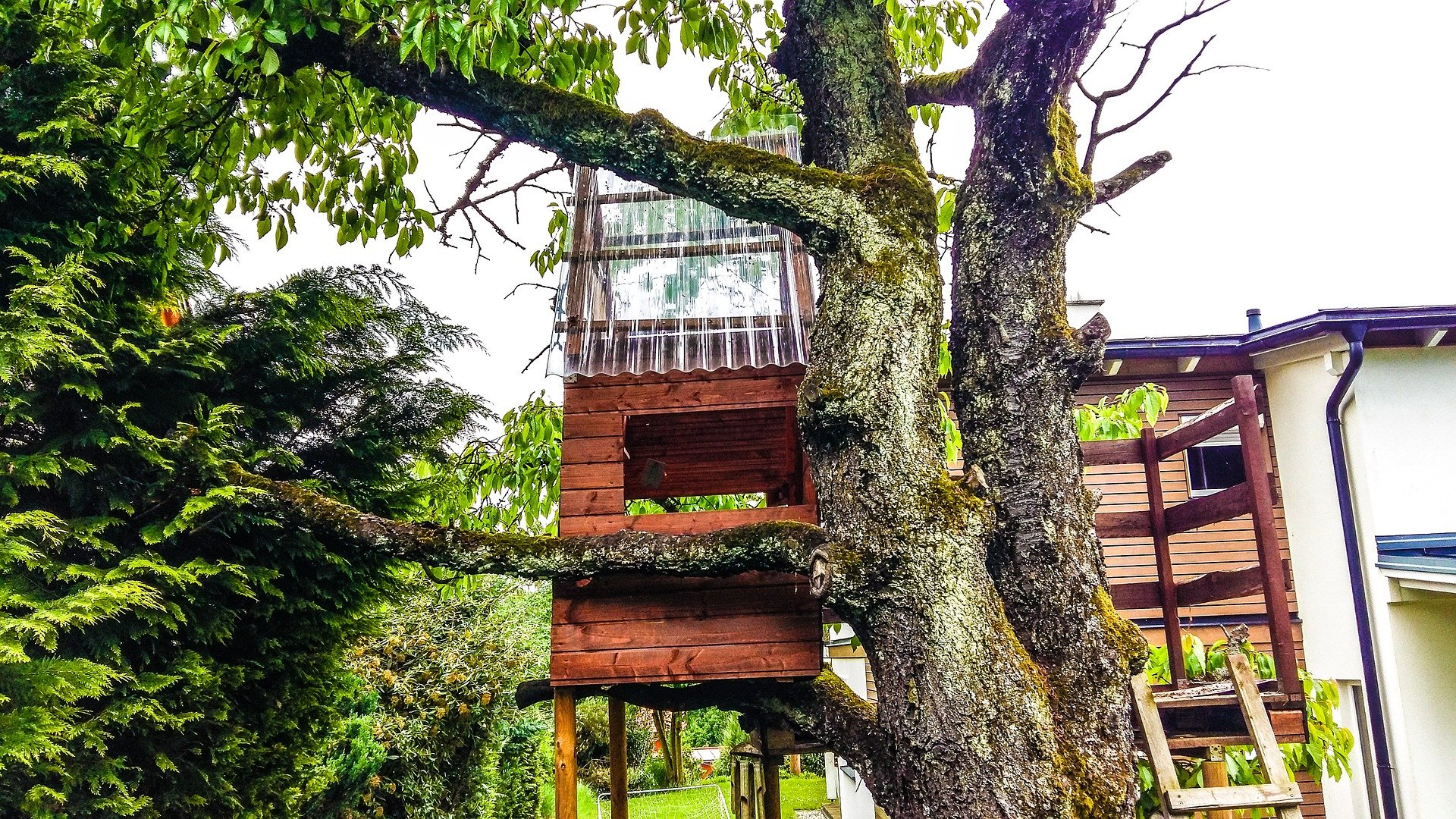 A treehouse in the middle of a backyard   Photo: Pixabay/Ben Faist
