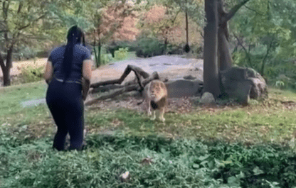 Myah Autry standing inside the lion exhibit at Bronx Zoo. | Source: YouTube/CBS News
