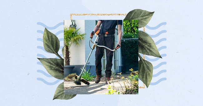 10 Ways To Keep Snakes Out Of Your Garden