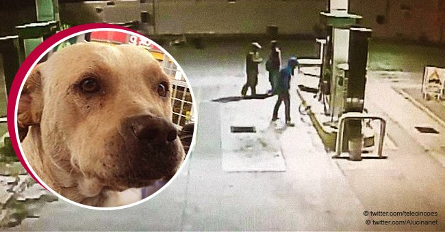 Stray dog adopted by the staff at gas station defends one of his human friends from armed thieves