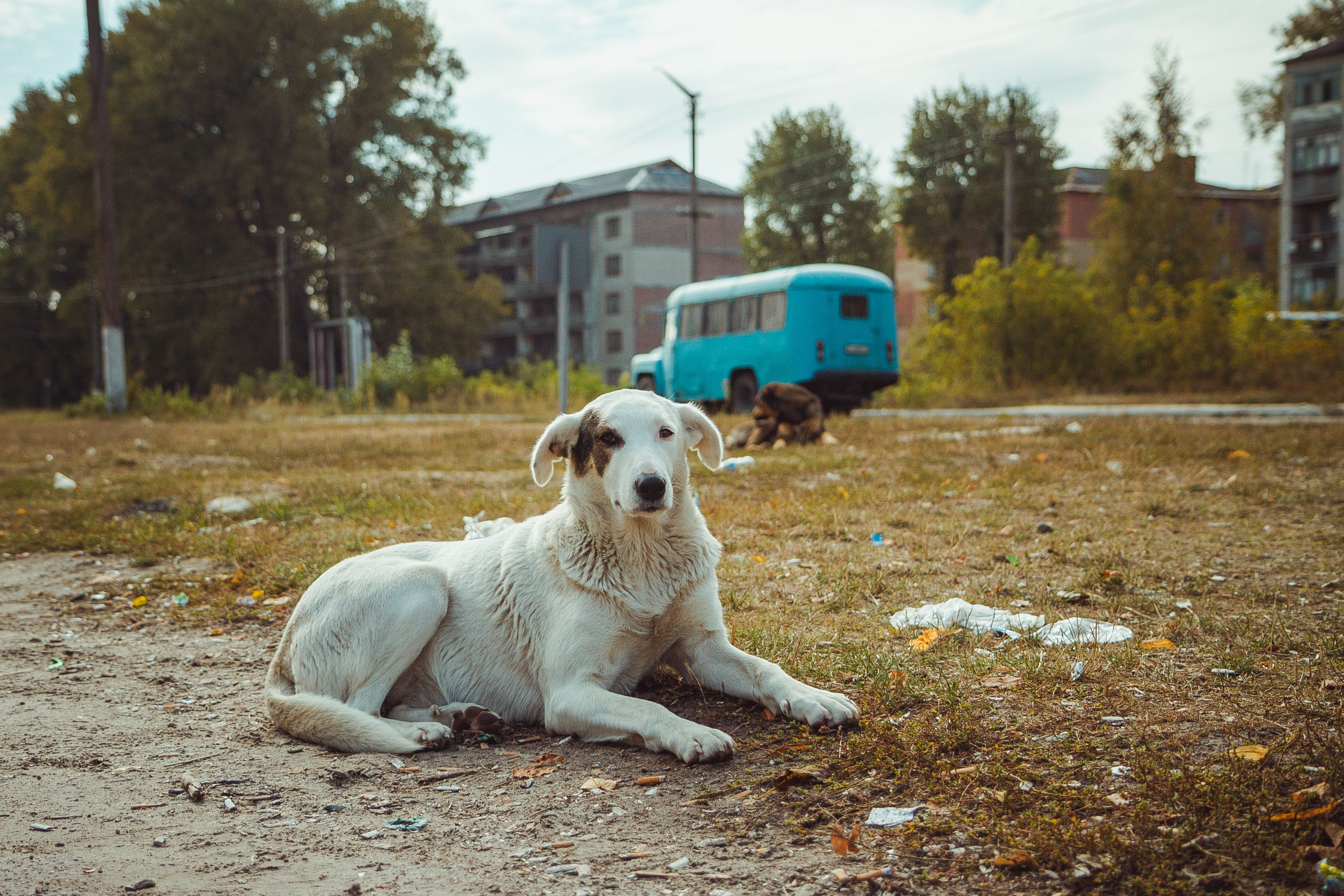 Homeless wild dog in old radioactive zone in Pripyat city - abandoned ghost town after nuclear disaster. Chernobyl exclusion zone.   Foto von: Sergiy Romanyuk via Shutterstock