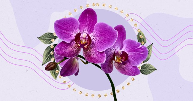 A Guide To Properly Caring For An Orchid