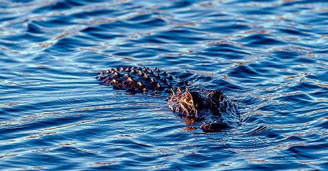 Daily Joke: Tourist Whose Boat Capsized Asks Local If There Are Alligators in the Water