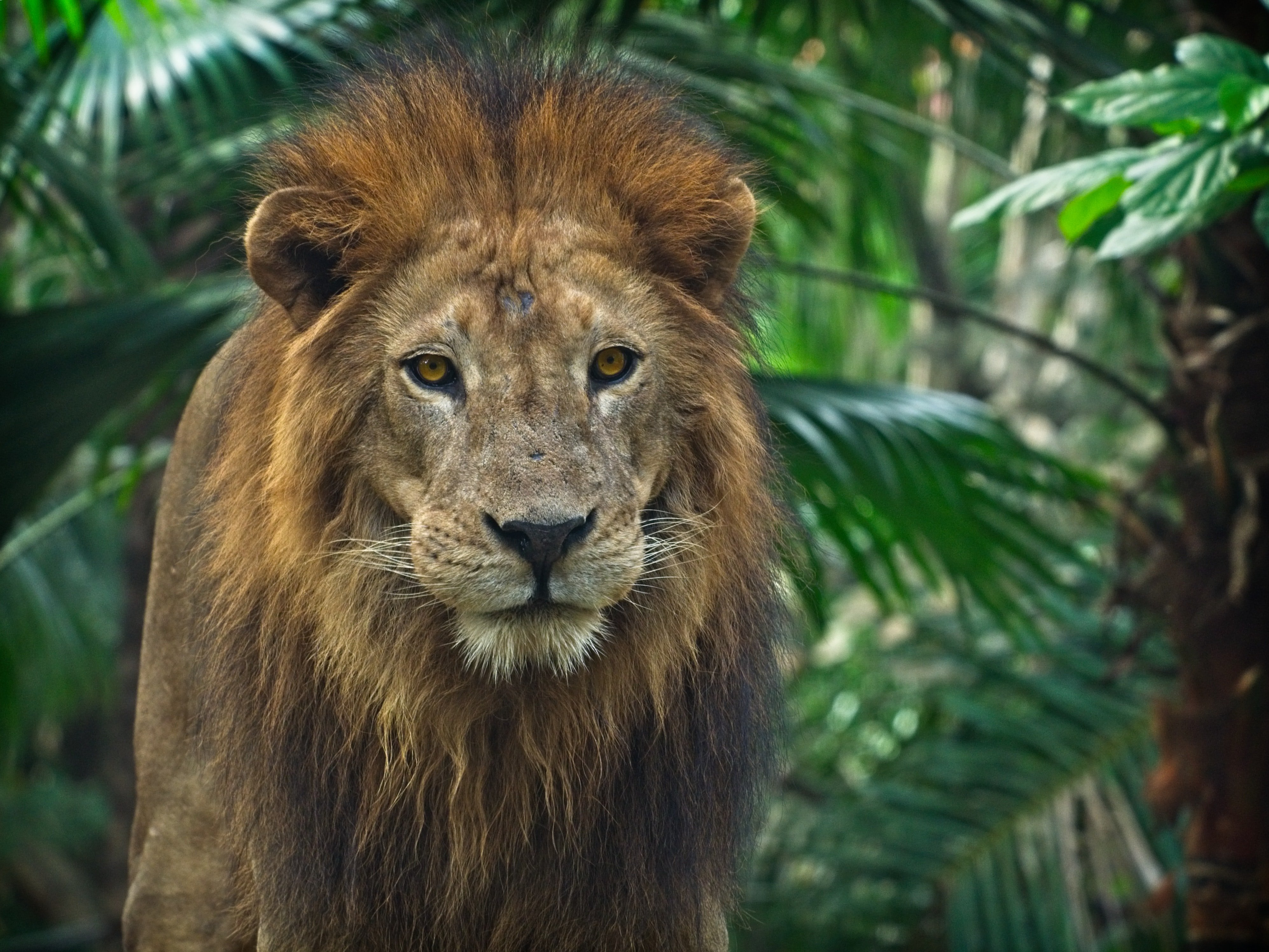 Photo of a lion in the jungle | Photo: Pexels