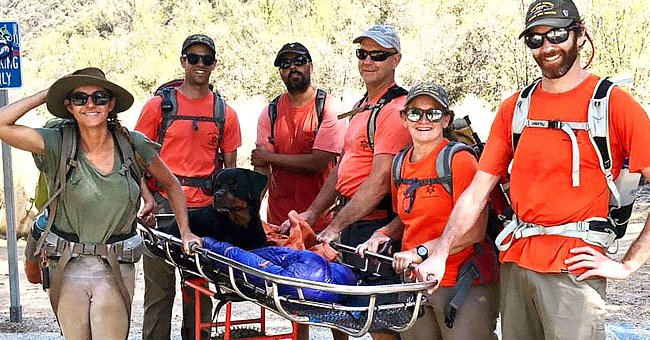 Rescue Team Help Carry Rottweiler after the Dog Injured Its Paw Amid Hike in California Forest