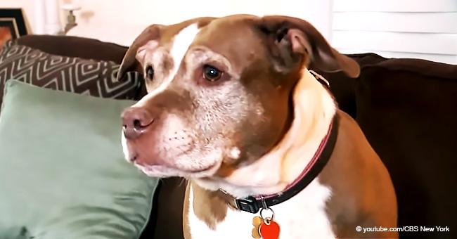 Une chienne héroïque s'enfuit de chez elle et cours chercher de l'aide pour sauver sa famille d'une fuite de gaz