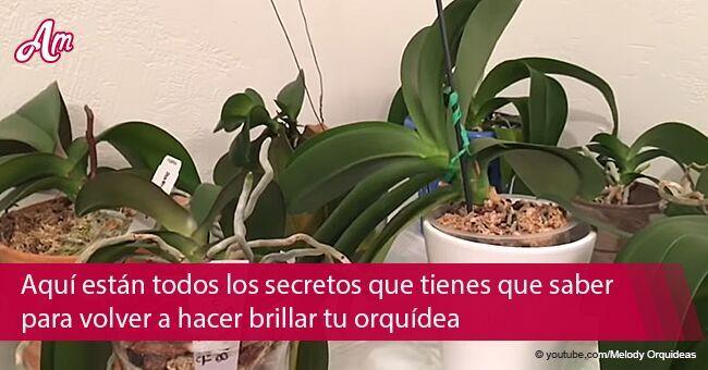 10 consejos para que florezca de nuevo una orquídea descolorida