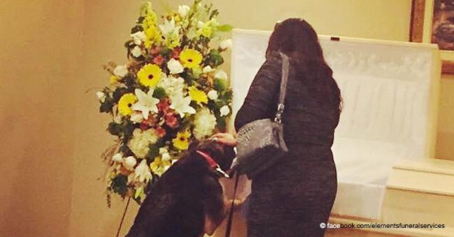 Une photo déchirante d'un chien en deuil pleurant son propriétaire décédé