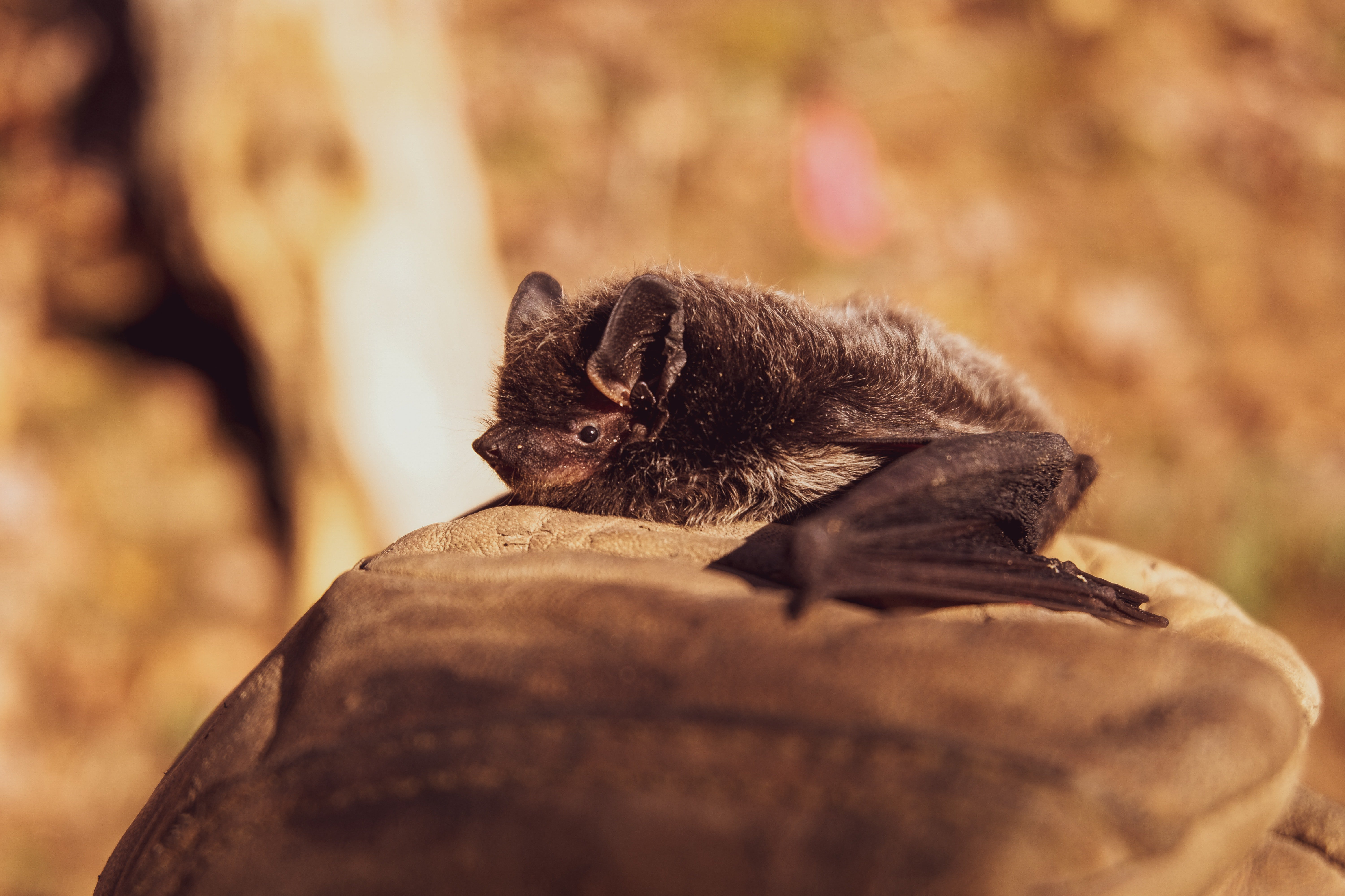 A picture of a bat lying on a rock | Photo: Pexels