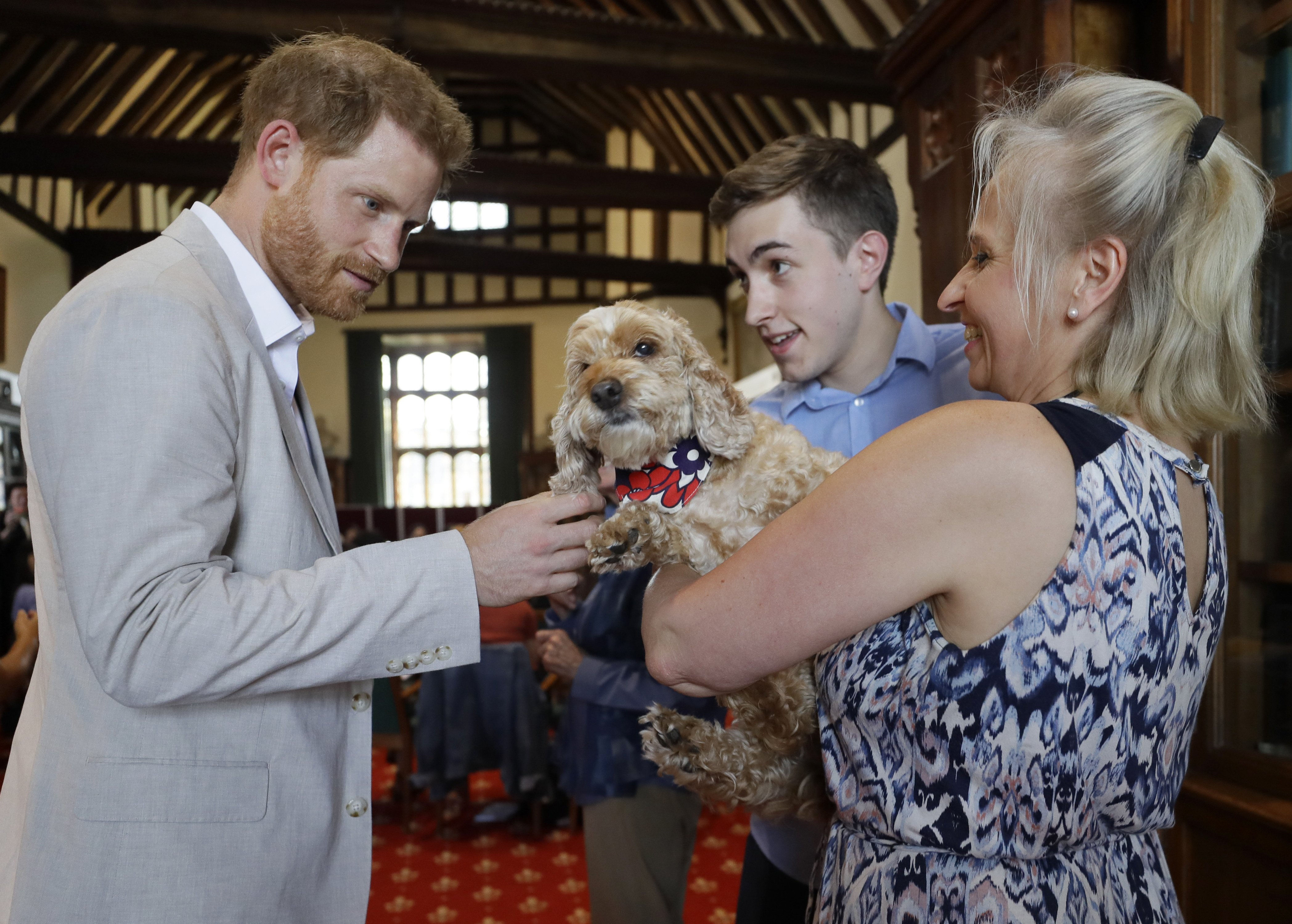 Prince Harry pets a dog during a Roots & Shoots meeting on July 23 at St. George's House, Windsor Castle | Photo: Getty Images