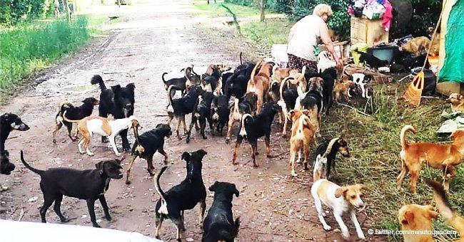 120 perros y 50 gatos rescatados de las calles donde vivían con sus dueñas