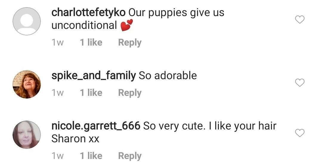 Fans comment on Sharon Osbourne's post featuring three of her dogs on August 31, 2020 | Photo: Instagram/sharonosbourne