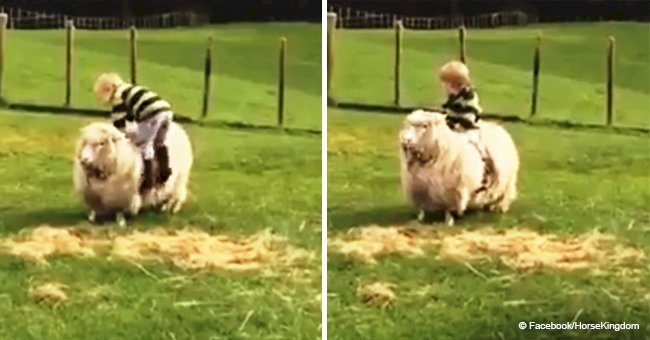 Little boy climbs on the back of a sheep, but suddenly the pet begins to run