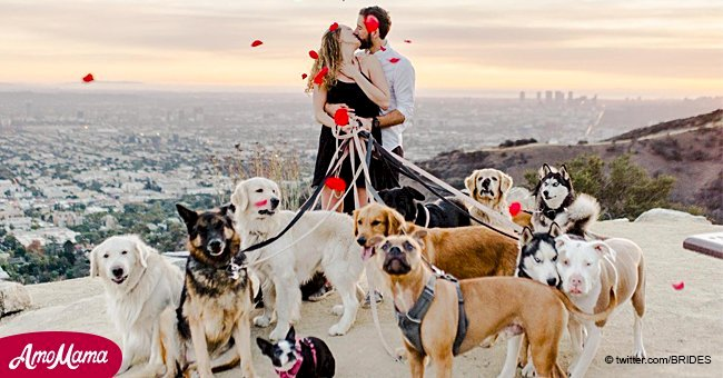 This man made a sweet proposal with 16 dogs and his fiancé was extremely happy