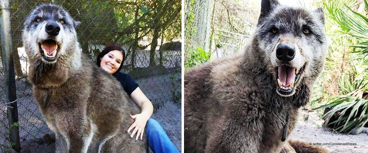 Les autorités allaient euthanasier ce chien géant, mais maintenant il est une star d'Internet